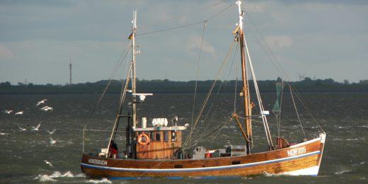 Fischkutter südlich von Norderney
