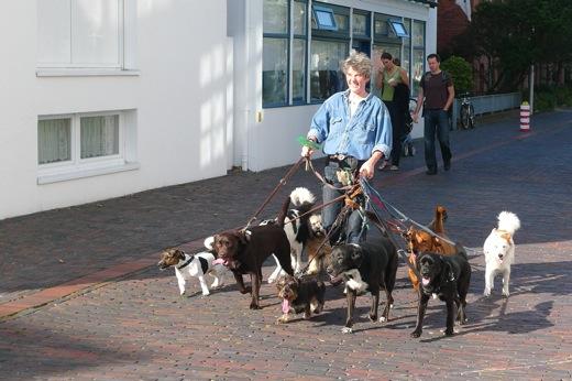 Hundepension auf Norderney bei Dr. Solaro