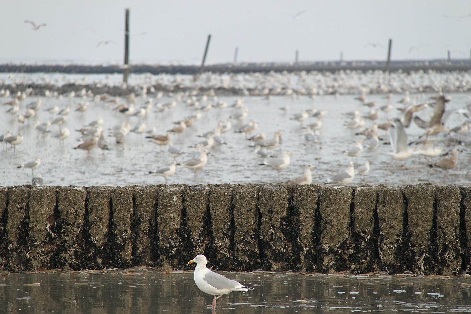 Möwen am Strand von Norderney