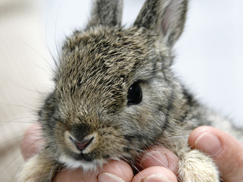 Kaninchen Norderney Rettung