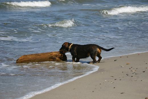 Norderney Hund Strand Nachsaison