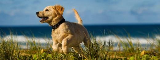 hund-urlaub-norderney