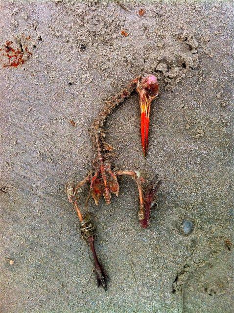 Tod am Strand