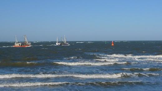 Krabben vor Norderney