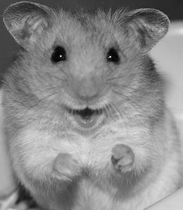 Hamster TK