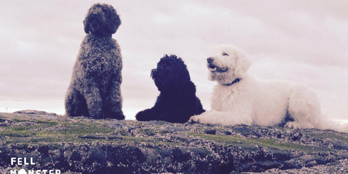 Fellmoster Norderney Hunde
