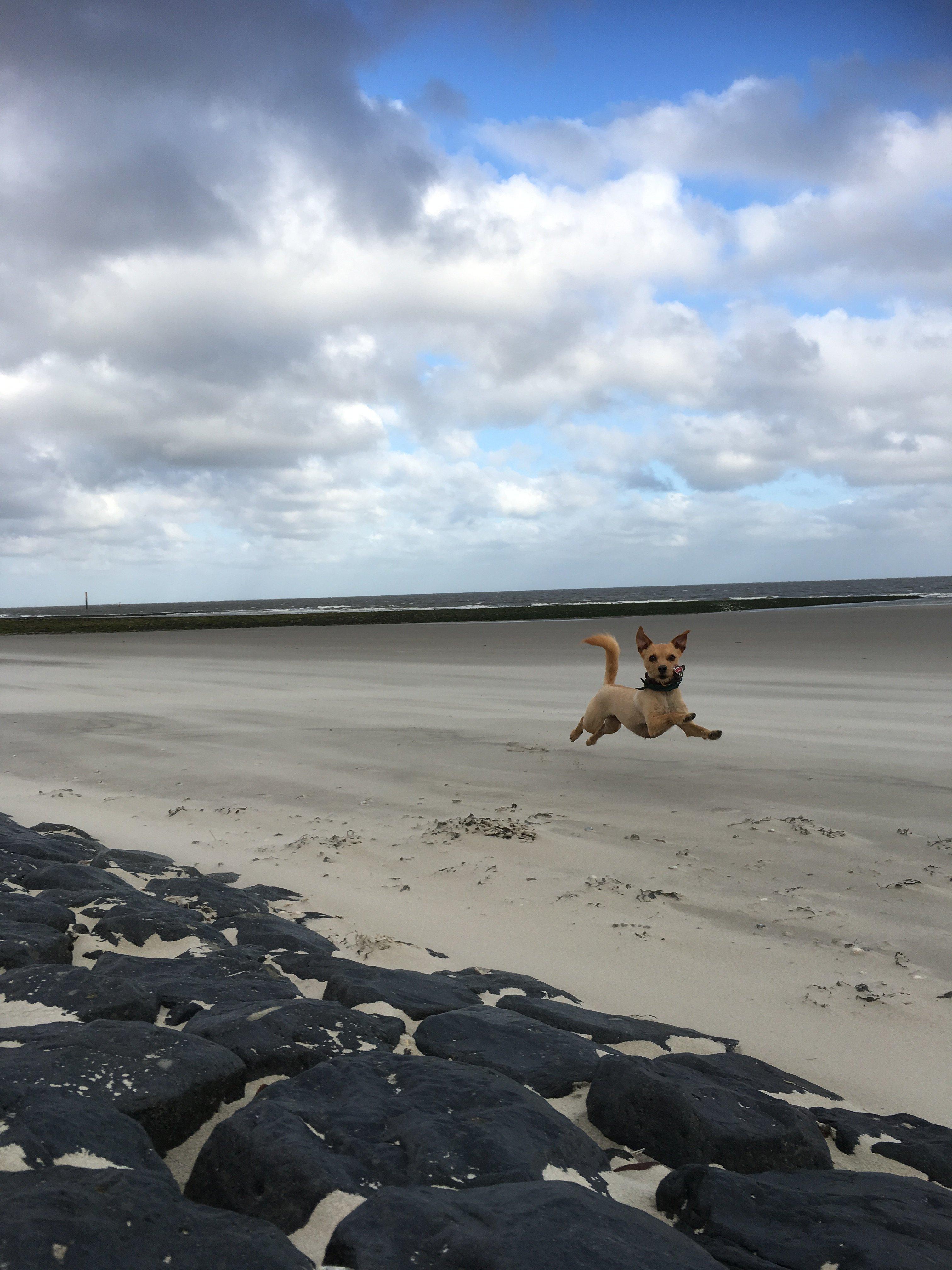 Norderney mit hund norderney nordsee magazin for Urlaub auf juist mit hund