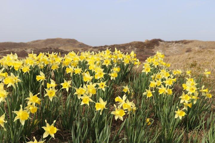 Frühling in den Dünen