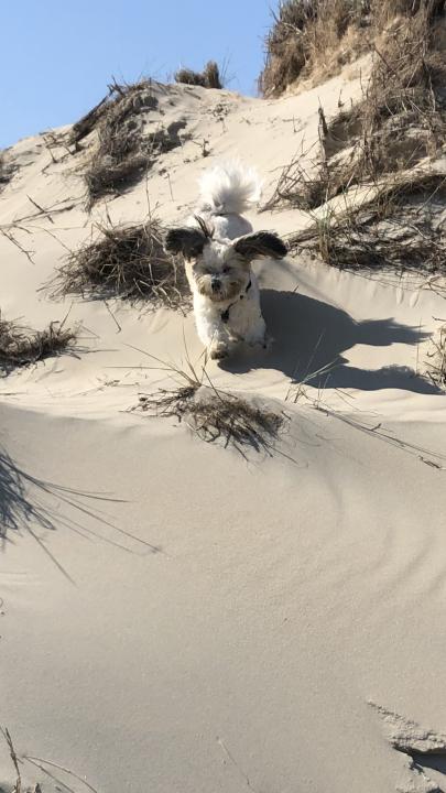 Glücklich auf Norderney Hund