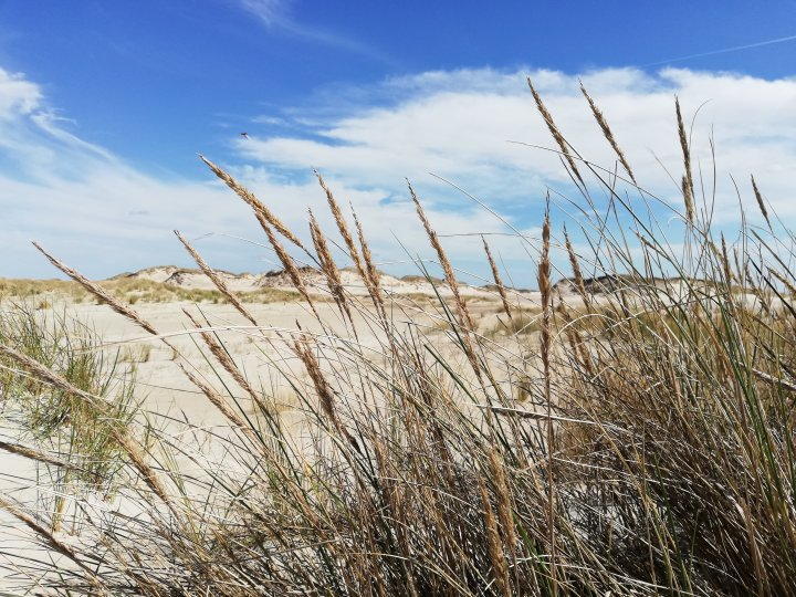 Glücklich auf Norderney - Strandhafer