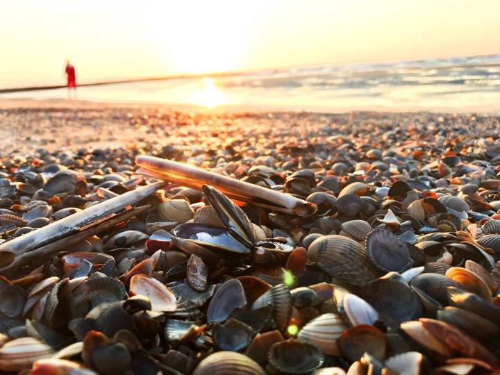 Glücklich auf Norderney - Muscheln