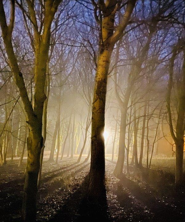 Nebel im Kurgarten