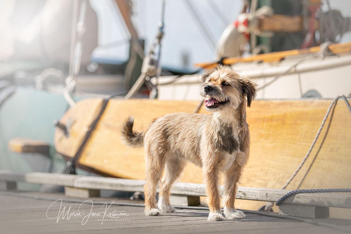 Hund, Maren-Jana Kortmann Hundefotografie