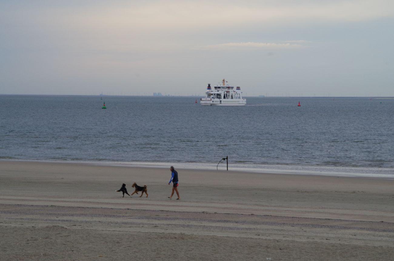 Frei laufende Hunde am Strand