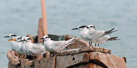 Zugvogeltage Programm